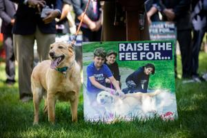 Advocates —including Levi Fetterman, Lt. Gov. John Fetterman's family dog — have called on the legislature to increase the licensing fee paid by dog owners.